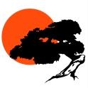 Bonsai-silhouette-sonne